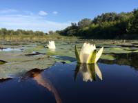 Tiszavirág ártéri tanösvény